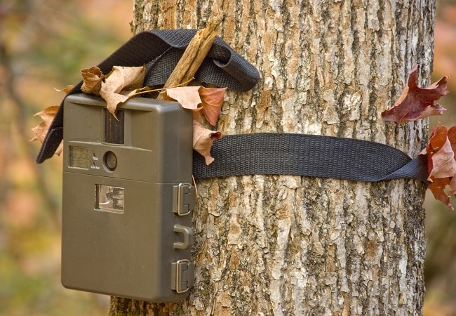Game camera attached to tree
